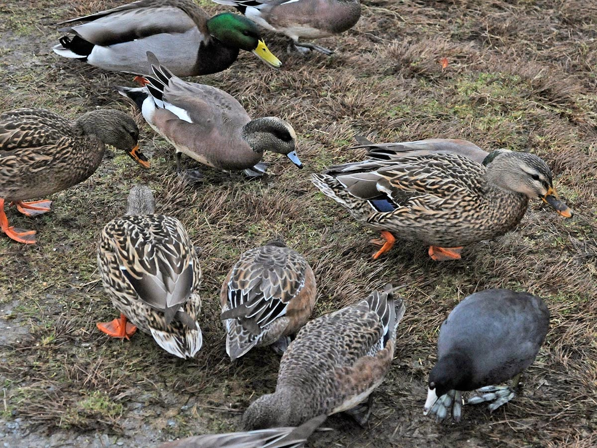 Northwest Nature Notes: AN INTIMATE AVIAN EXPERIENCE