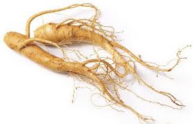 HEALTH BENEFITS AND SIDE EFFECTS OF GINSENG