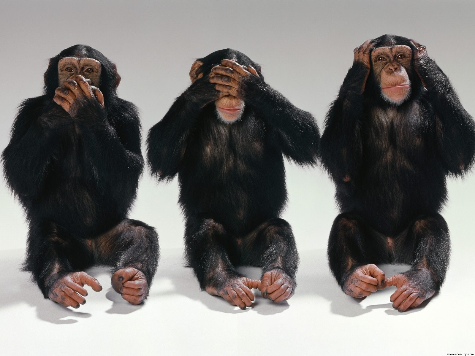 3 Monkeys Funny Wallpapers HD New