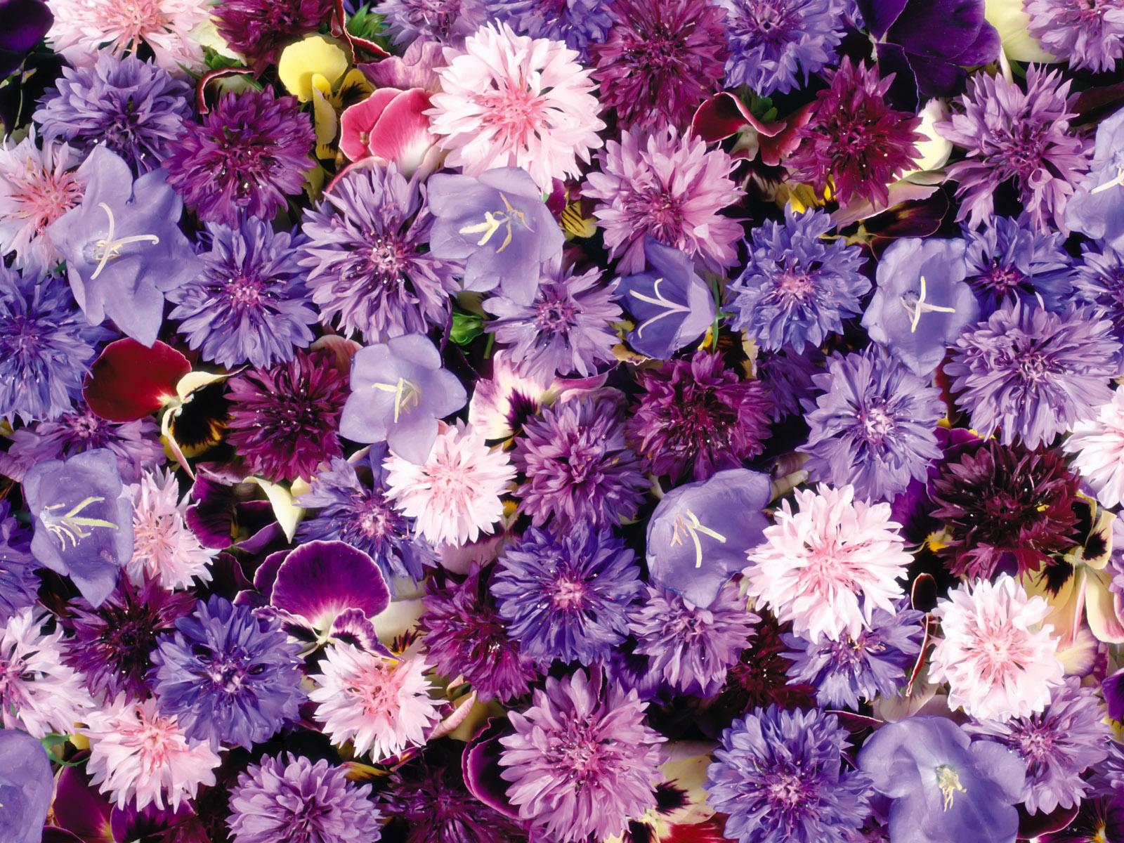Amazing Colorful Flowers Decoration Photos 1600x1200 Pixhome