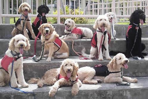 Seeing Eye Dog Training Video Movie