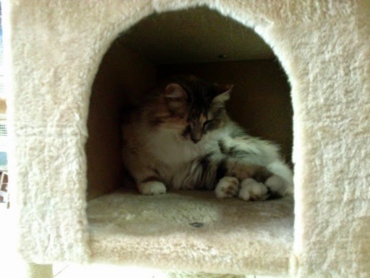 Cat shelter in Rome