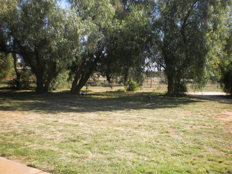 More Lawns