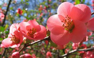 Gambar flora dan fauna