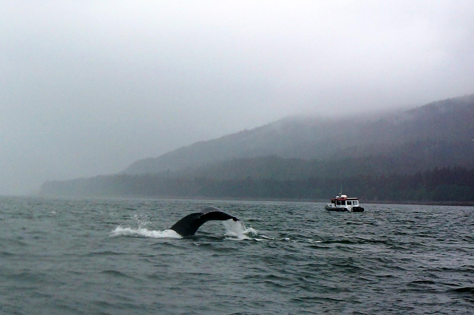 juneau whale watching alaskan cruise review