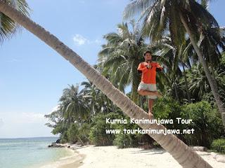 pohon kelapan pantai tanjung gelam karimunjawa