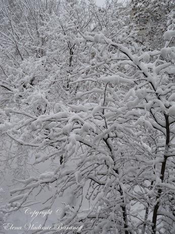 Elena Baranoff - Snow White Trees - Elena V. Baranoff - Artist Elena V. Baranoff - Master Elena V. Baranoff - Russian Landscape - Winter Landscape