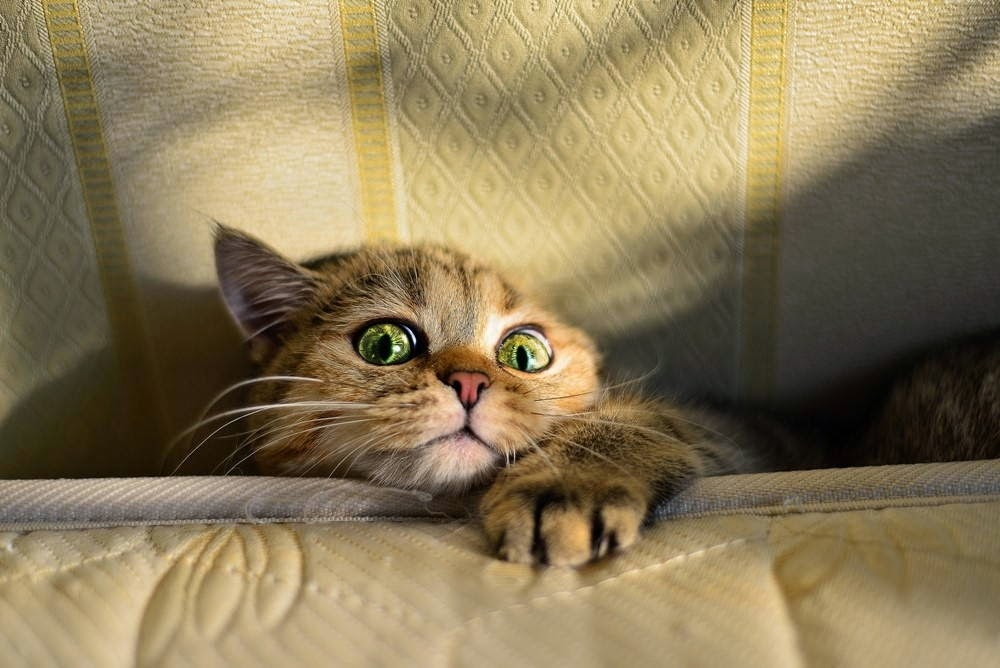 Funny cats - part 99 (40 pics + 10 gifs), cat pictures, cat stuck on couch