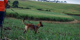Dog Training Pietermaritzburg