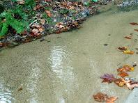 L'aigua i el sauló a la riera de Vallmanya