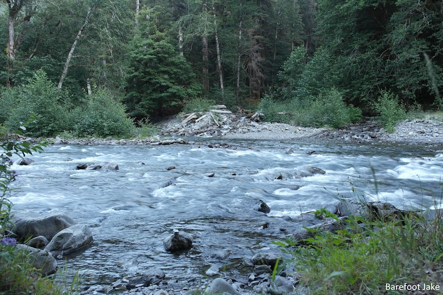 east fork quinault river