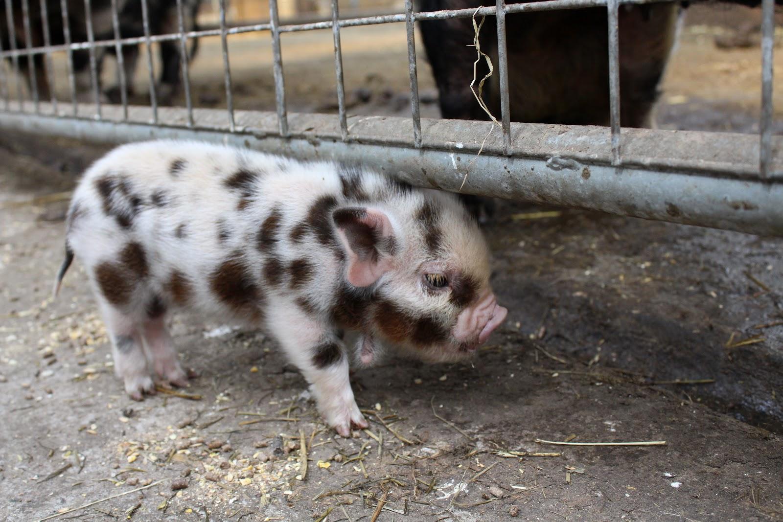 Smithills Open Farm Bolton