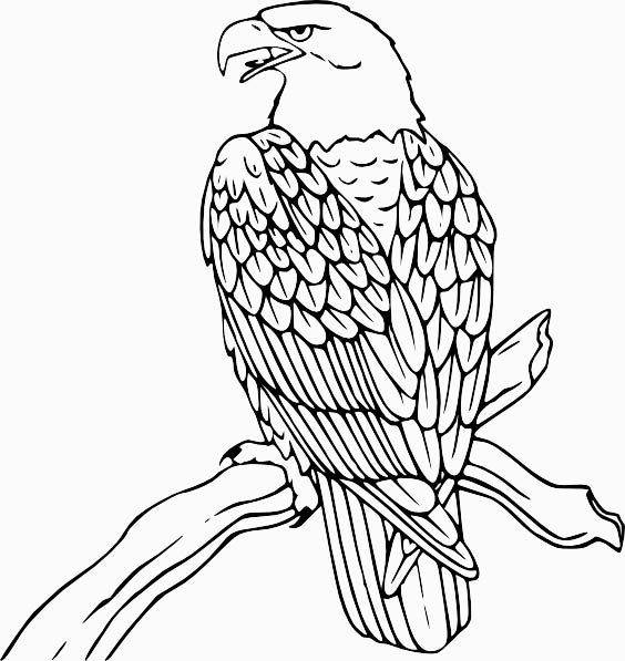 Eagle Bird Coloring Pages To Printable title=