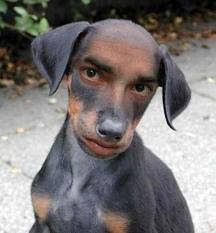 gambar gambar lucu anjing