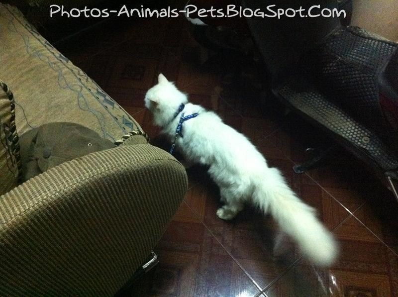 http://4.bp.blogspot.com/-optEgBmMGUc/TbGisgu-gAI/AAAAAAAAAvA/N-Yl2_eRIWs/s1600/Cat%2Bfur%2Bruffled_0001.jpg