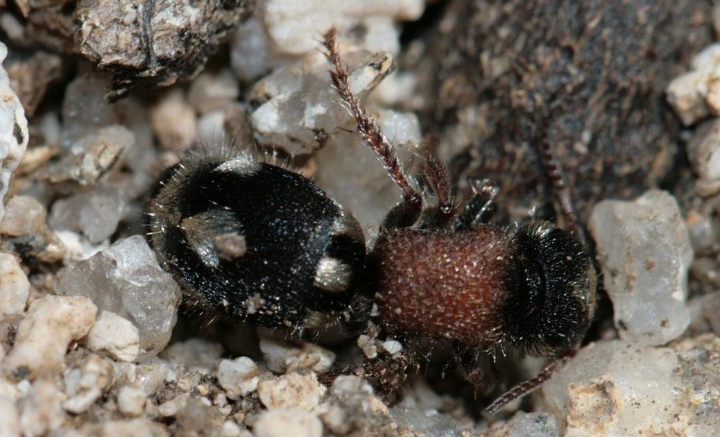 Notas de campo y jard n la hormiga que no lo es y el for Hormigas en el jardin