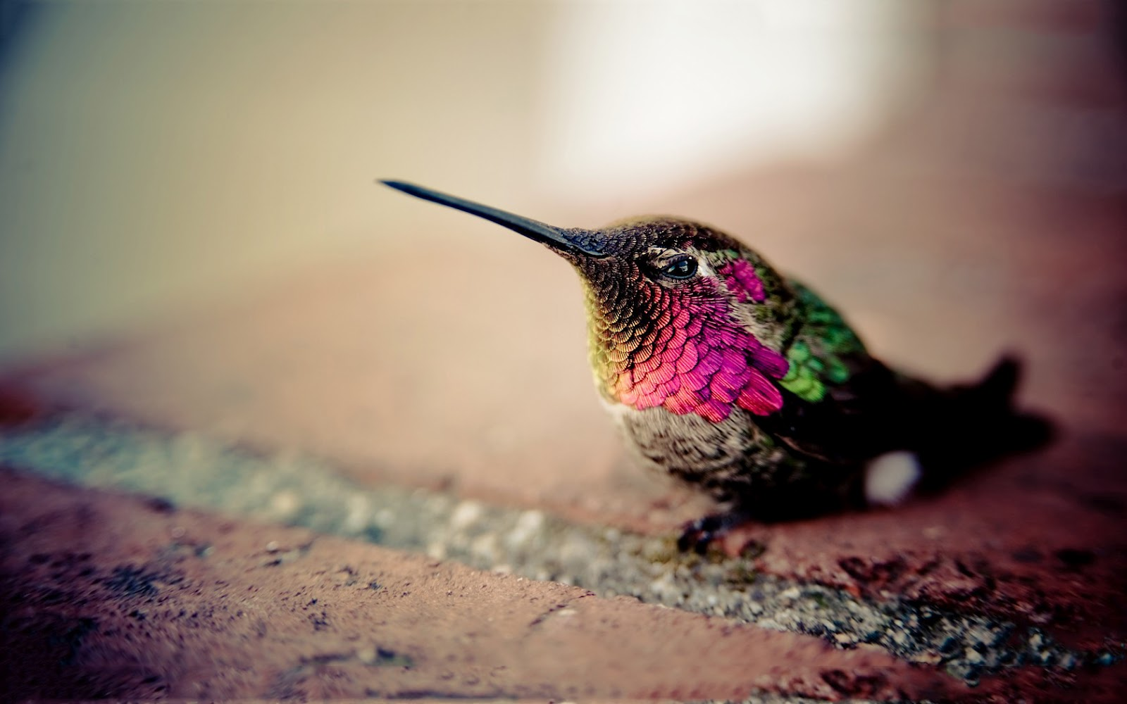 beautiful colibri bird hd - photo #21