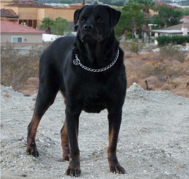 World's Most Dangerous Dogs