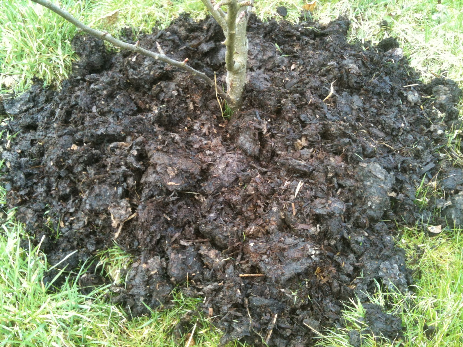 Mulching with manure could save you from weeding all summer.