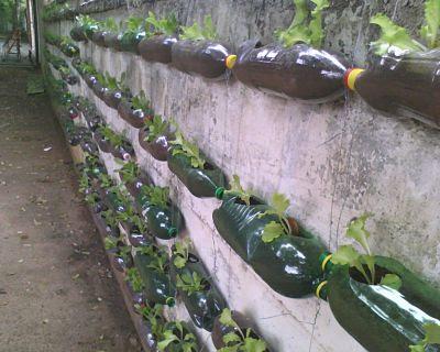 Horta feita com garrafas PET