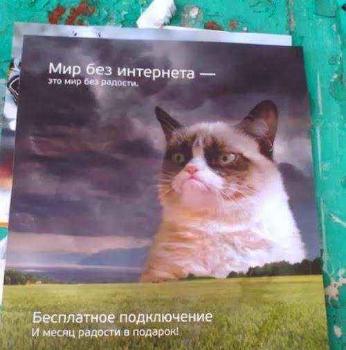 Грампи кэт рекламирует российский интернет.