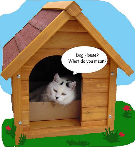 Seis razones para preferir gato antes que perro - El gato en casa ...