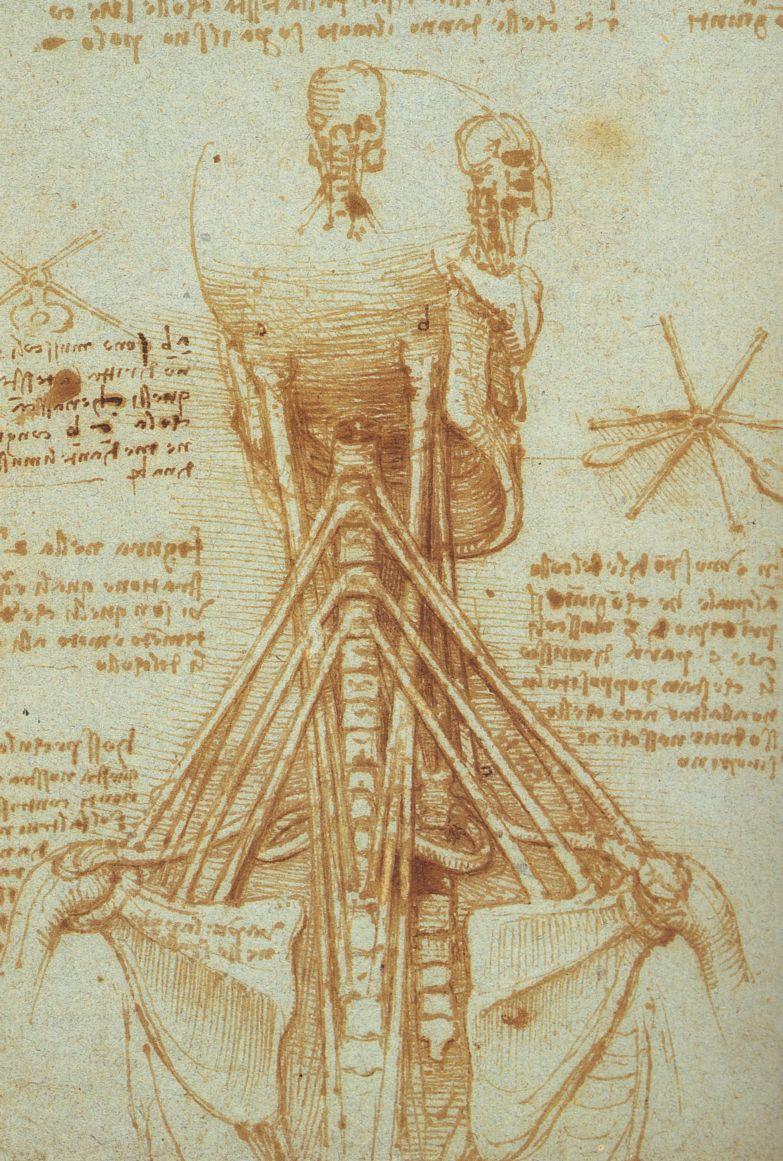 Da Vinci\'s Anatomy on Itunes | The Art of Medicine