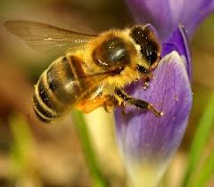 Nagyító alatt a méhterápia!