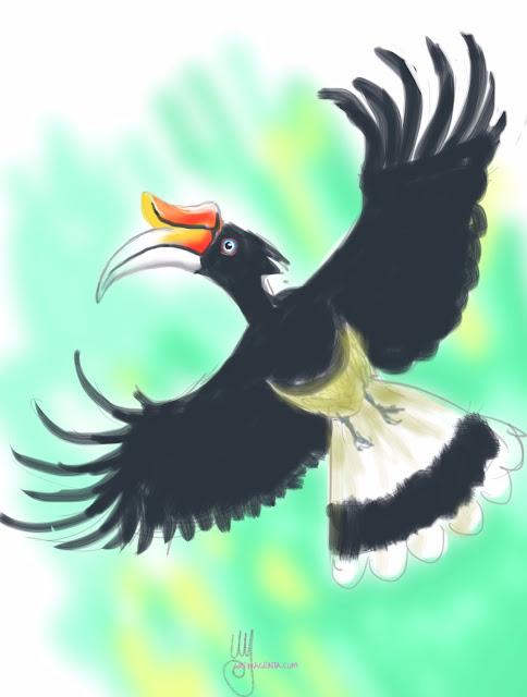 Rhinoceros hornbill sketch painting. Bird art drawing by illustrator Artmagenta