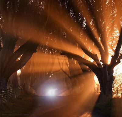 Una hilera de arboles donde se ve una luz al final