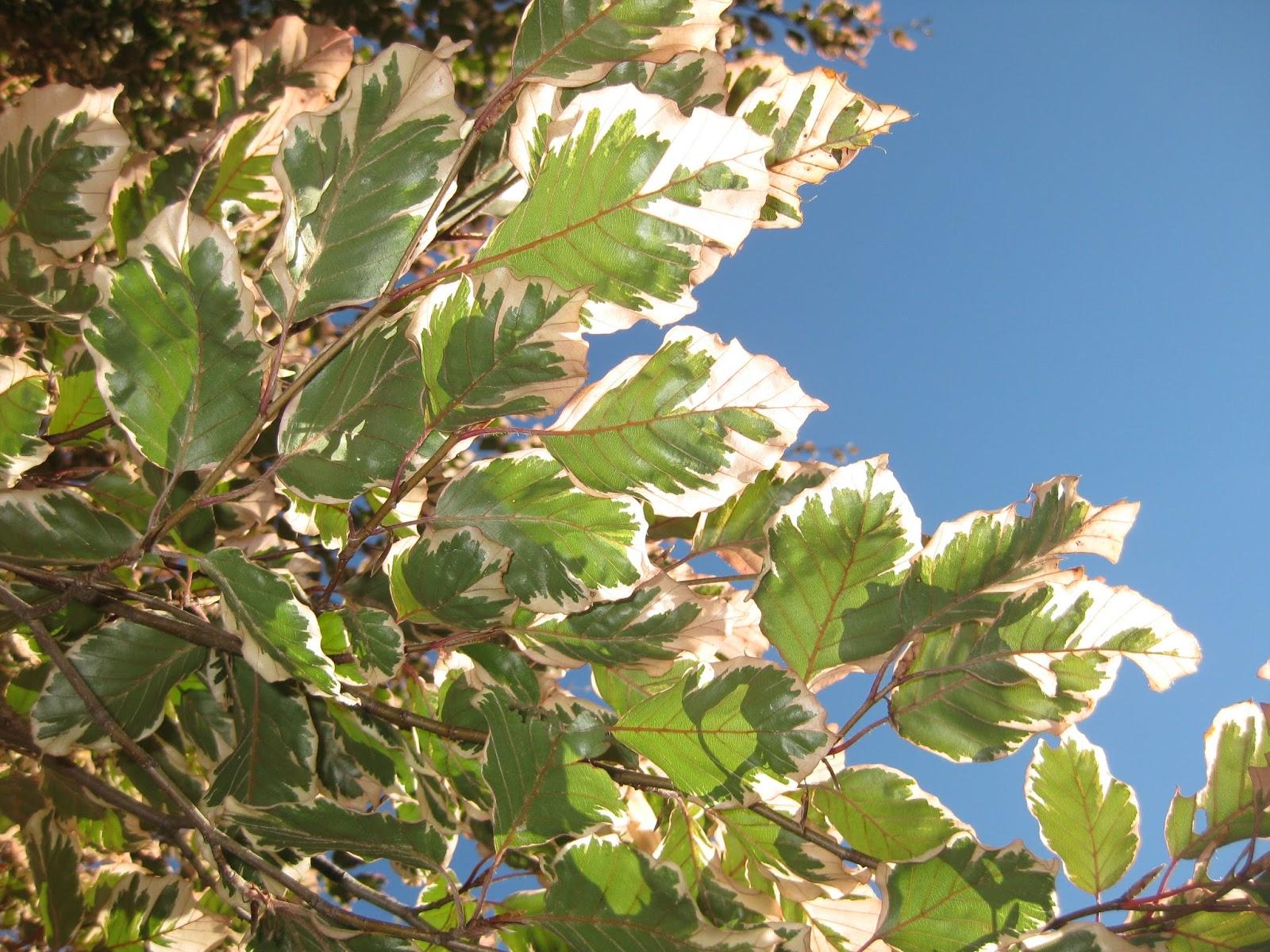Rotary Botanical Gardens - Hort Blog: A Crazy Morning!