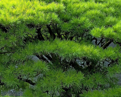 Green Free Nature Wallpaper