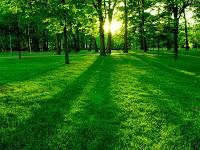 Cara Alam Menghibur Kita