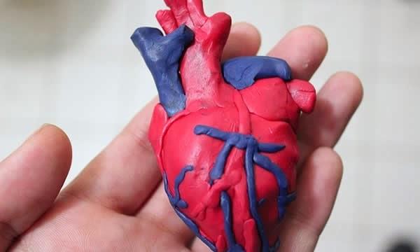 Como elaborar un corazon humano en foami - Imagui