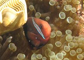 Mengamati Indahnya Terumbu Karang di Pulau Akar, Kepulauan Anambas