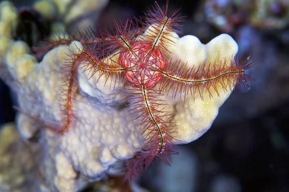 صور مبهرة لمخلوقات بحرية تضيء الأعماق بجمالها الأخذ Fish Lighting at Seas