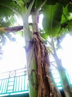 Mustika kodam Raja Naga Debok Cawang