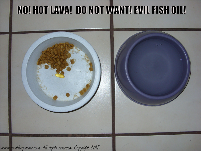 Rambling moose fish oil or hot lava you decide for What does fish oil do for dogs
