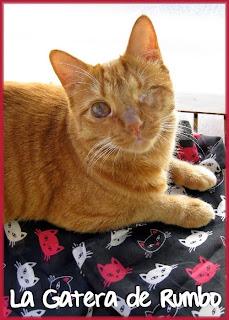 Pañuelo con estampado de gatos
