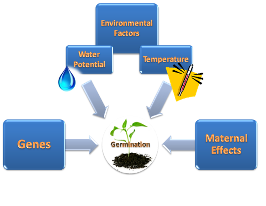 effects of environmental factors on the phenotype of pea plants The effect of environment on phenotype- the lac operon is an operon required to the transport and metabolism of lactose in escherichia coli  it consists of three adjacent structure genes laca, lacy, and.