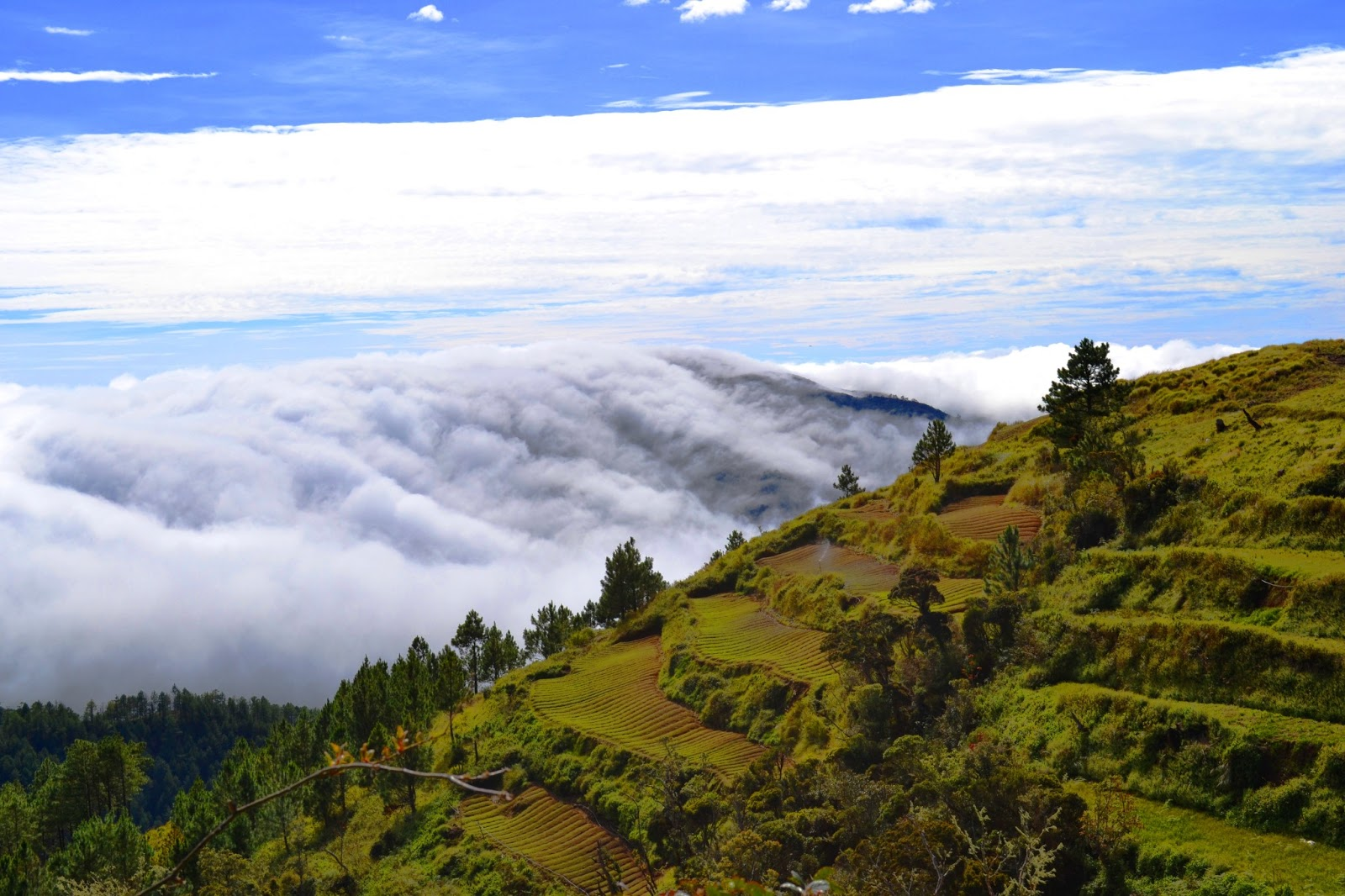 mt pulag The mayor of kabayan town in benguet province has urged the department of environment and natural resources (denr) to regulate the entry of hikers wanting to climb mt pulag, particularly.