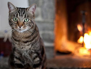 Opium for cats with digestive problems