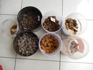 Obat herbal untuk penccegahan penyakit pada ayam aduan