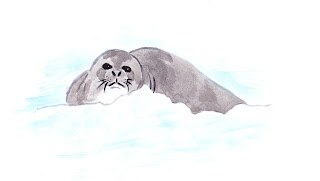 antarctica, researh, seal, watercolours, illustration | Jen Haugan