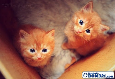 kucing comel cutties cats