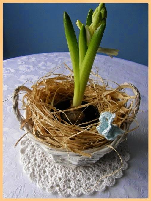 hyacintus v okrasném košíků