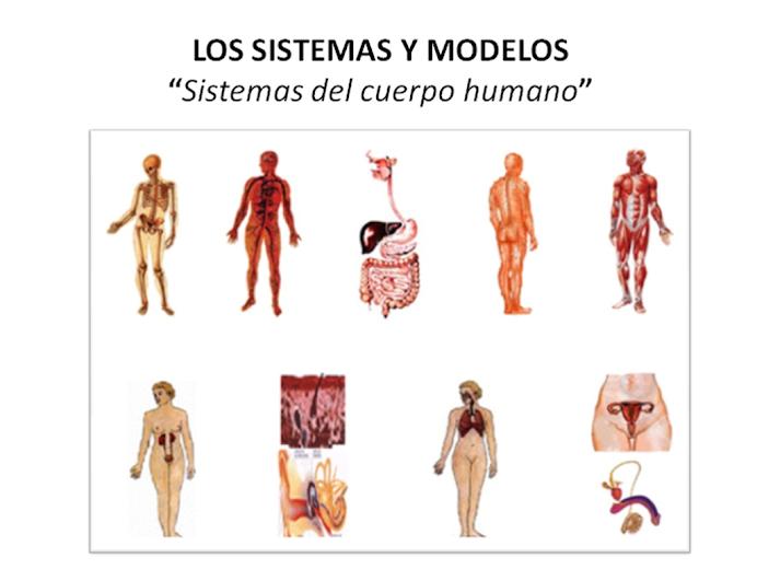 Sistemas y Modelos: funciones órganos cuerpo humano