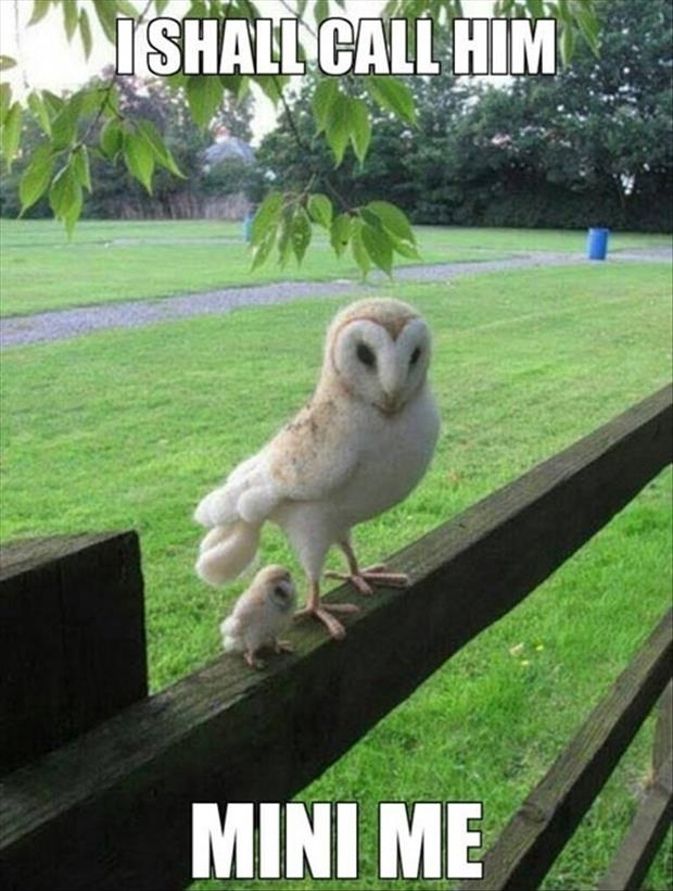 30 Funny animal captions - part 13 (30 pics), animal pictures with captions, funny memes, mini me owl