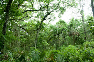 La vegetación tropical del Little Talbot State Park en Florida