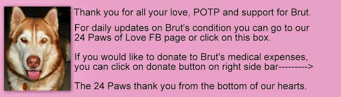 Brut Updates